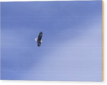 An American Bald Eagle In Flight Wood Print by Heather Perry