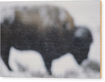 An American Bison Braves A Blizzard Wood Print by Annie Griffiths