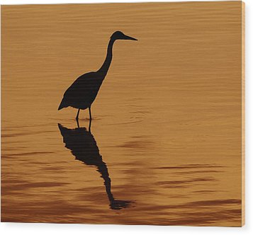 An Early Morning Dip Wood Print by Tony Beck
