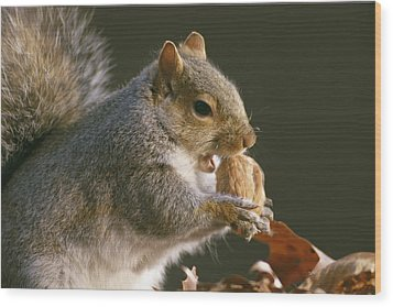 An Eastern Gray Squirrel Sciurus Wood Print by Chris Johns