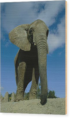 An Elephant At The Pittsburgh Zoo. This Wood Print by Michael Nichols