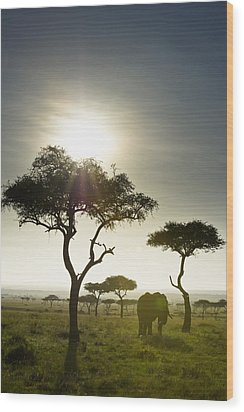 An Elephant Walks Among The Trees Kenya Wood Print by David DuChemin