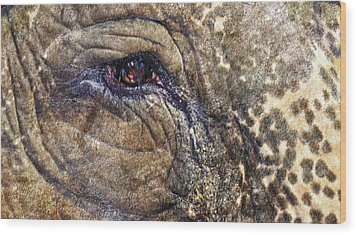 Wood Print featuring the photograph An Elephants Tear by Kelly Reber
