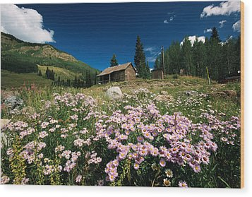 An Old Miners Cabin With Purple Asters Wood Print by Richard Nowitz