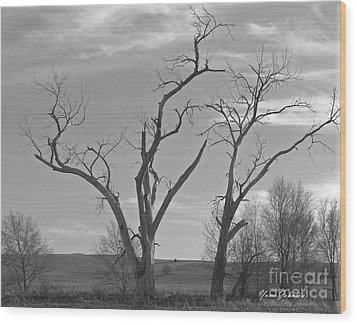An Old Trees Wood Print by Yumi Johnson