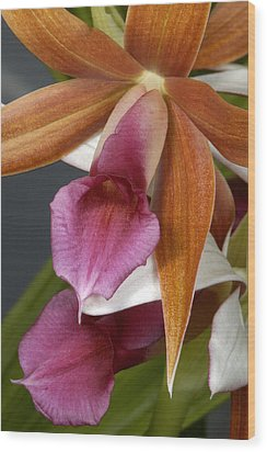 An Orchid, Probably A Cattleya Hybrid Wood Print by Stephen Sharnoff