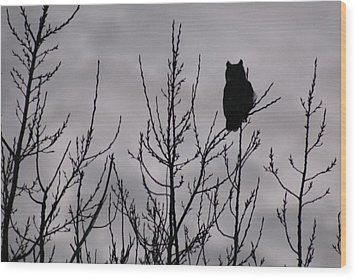 An Owl Silhouette Wood Print