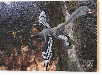 Anchiornis Huxleyi  Wood Print