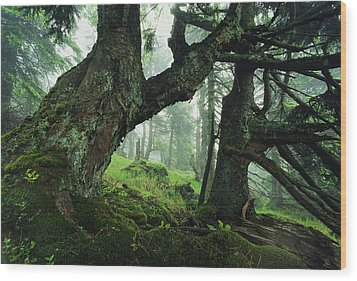 Ancient Fir Trees In Forest Wood Print by Norbert Rosing