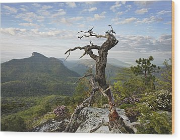 Ancient Pine On Hawksbill Mountain Wood Print by Keith Clontz