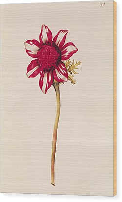 Anemone Wood Print by Nicolas Robert