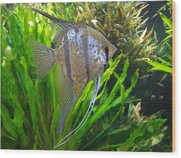 Angel Fish Wood Print by Tanya Moody