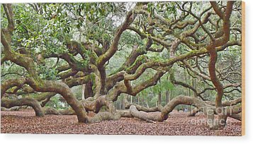 Angel Oak Wood Print by Val Miller
