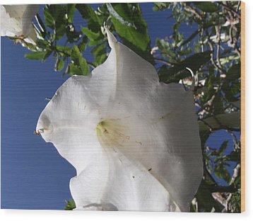 Angel Skirts Wood Print by Heather Jett