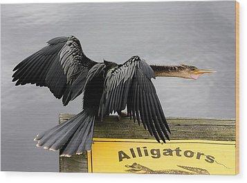 Anhinga Looking For Alligators Wood Print by Paulette Thomas