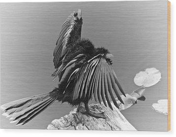 Anhinga Water Bird Wood Print by Carolyn Marshall