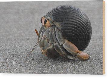Animals Hermit Crab At Curu Wood Print