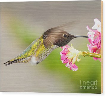 Wood Print featuring the photograph Anna Hummingbird by Jack Moskovita