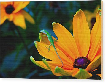 Anole On Yellow Flower Wood Print by Katherine Altman