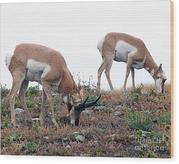Wood Print featuring the photograph Antelopes Grazing by Art Whitton