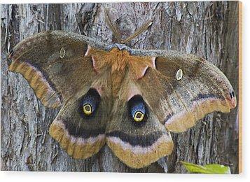 Antheraea Polyphemus Polyphemus Moth  Wood Print