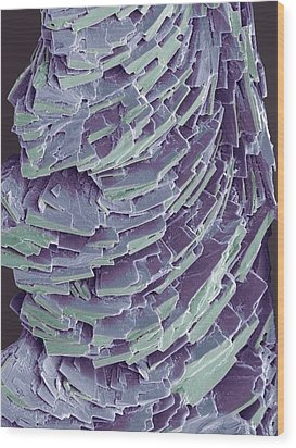 Antihistamine Drug Crystals, Sem Wood Print by Steve Gschmeissner