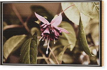 Wood Print featuring the photograph Antiqued Fuchsia by Jeanette C Landstrom