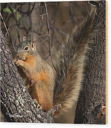 Apache Fox Squirrel Wood Print by David Salter
