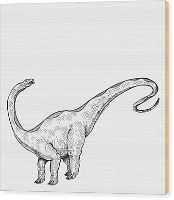 Apatosaurus - Dinosaur Wood Print by Karl Addison