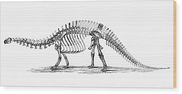 Apatosaurus Excelsus,  Aka Brontosaurus Wood Print by Science Source