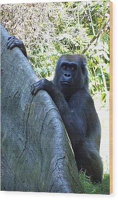 Ape Wood Print by Ralph Jones