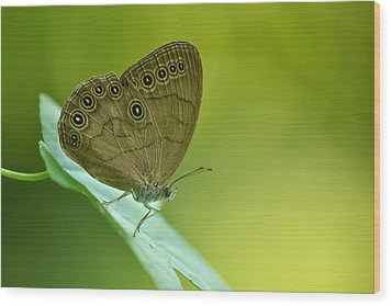 Wood Print featuring the photograph Appalachian Brown by JD Grimes