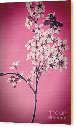 Apple Blossoms Wood Print by HD Connelly