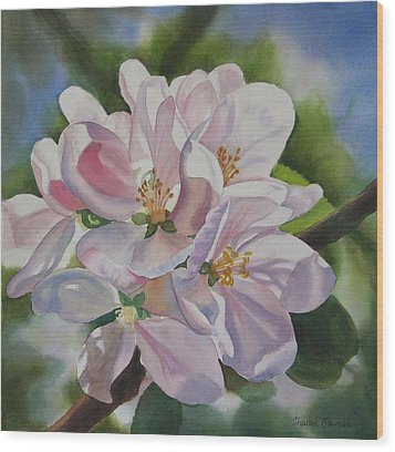 Apple Blossoms Wood Print by Sharon Freeman