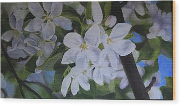 Apple Blossoms Wood Print by Tammy  Taylor