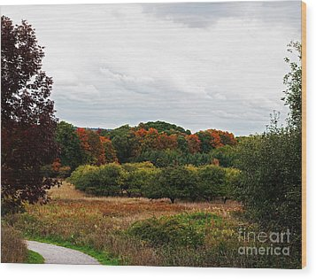 Apple Orchard Gone Wild Wood Print by Barbara McMahon