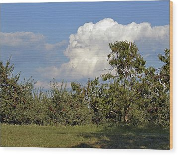 Apple Orchard Wood Print by Richard Gregurich