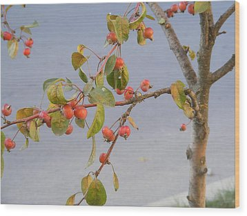 Wood Print featuring the photograph Apple Tree by Bogdan Floridana Oana
