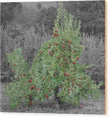 Apple Tree Wood Print by John Small