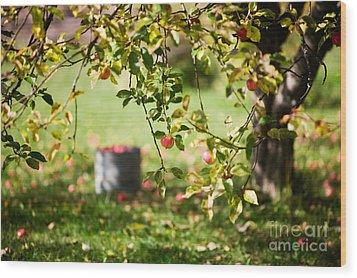 Apple Tree Wood Print by Kati Molin