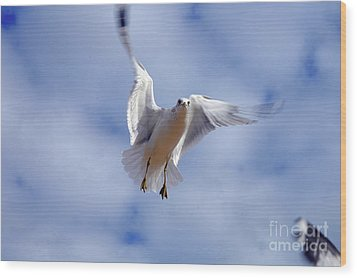 Wood Print featuring the photograph Applying Brakes In Flight by Clayton Bruster