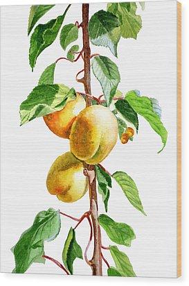 Apricots Wood Print by Irina Sztukowski