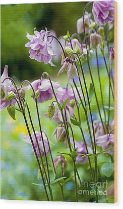 Aquilegia In Spring Flowers Wood Print by Donald Davis
