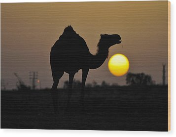 Arabian Camel Wood Print by Photostock-israel