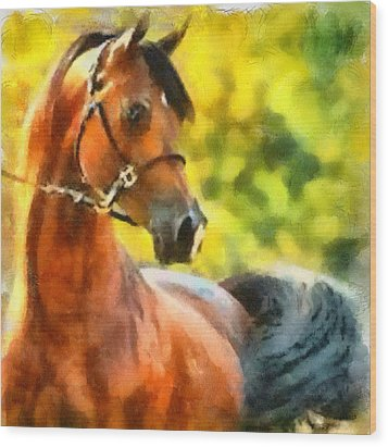 Wood Print featuring the painting Arabian Stallion by Elizabeth Coats