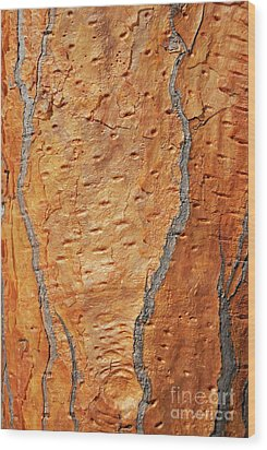 Arborescent Giant Prickly Pear Cactus Wood Print by Sami Sarkis