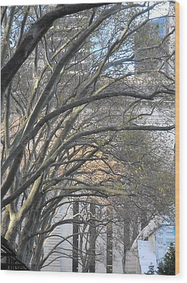 Arched Trees Wood Print by Kimberly Perry