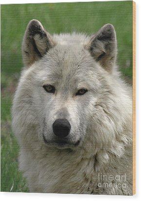 Arctic Wolf Portrait Wood Print
