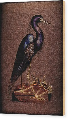 Ardea Caerulea Wood Print by Li   van Saathoff