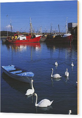 Ardglass, Co Down, Ireland Swans Near Wood Print by The Irish Image Collection